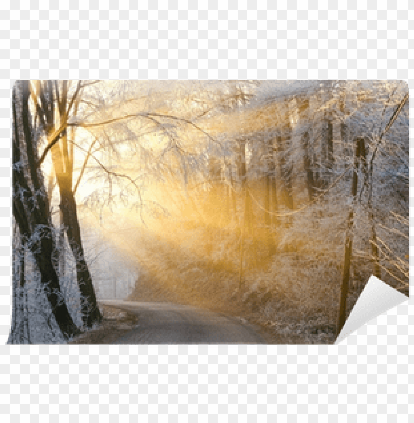 free PNG the sun's rays pass through the fog in winter wall - birch PNG image with transparent background PNG images transparent