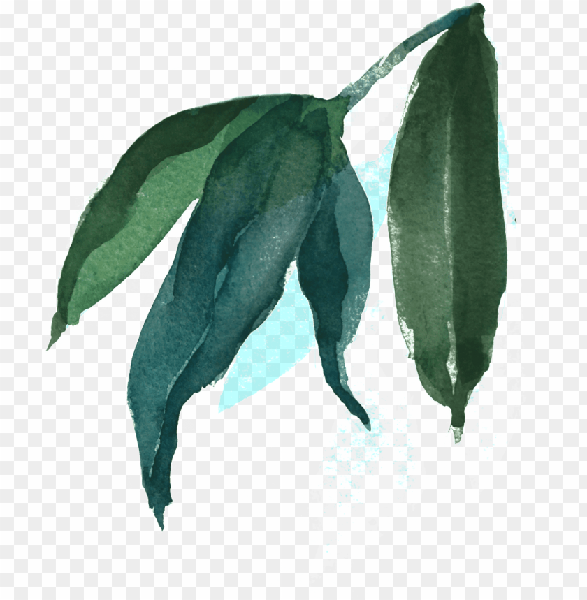 free PNG this backgrounds is watercolor painting leaves transparent - watercolor painti PNG image with transparent background PNG images transparent