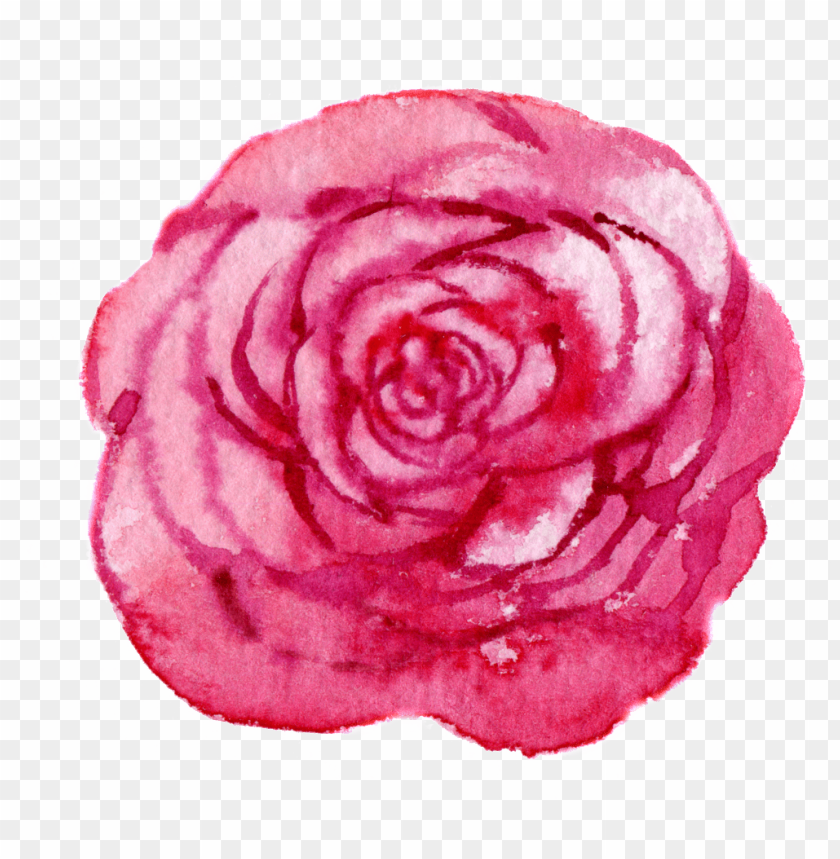 free PNG this graphics is hand drawn a rose flower png transparent - portable network graphics PNG image with transparent background PNG images transparent