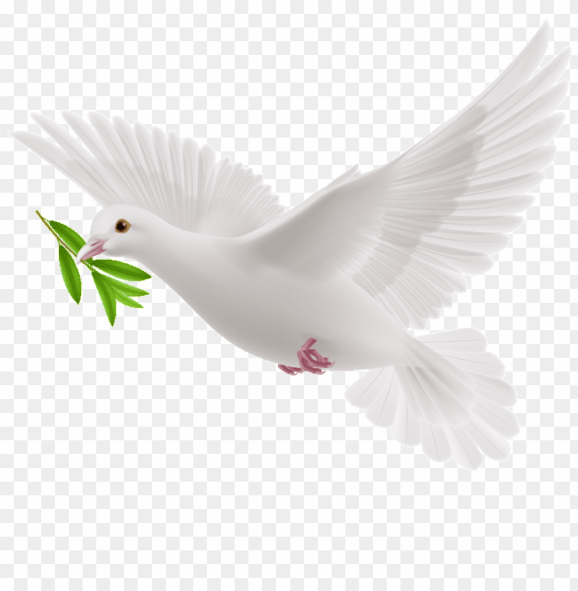 free PNG this graphics is peace dove cartoon transparent about - transparent olive branch dove PNG image with transparent background PNG images transparent