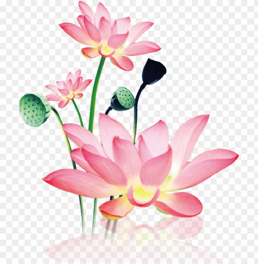 free PNG this product design is hand painted watercolor lotus - sacred lotus PNG image with transparent background PNG images transparent
