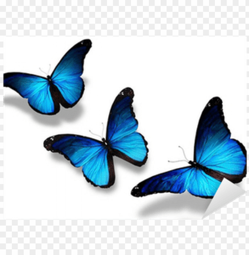free PNG three blue butterflies flying, isolated on white sticker - 3 butterflies flying together PNG image with transparent background PNG images transparent