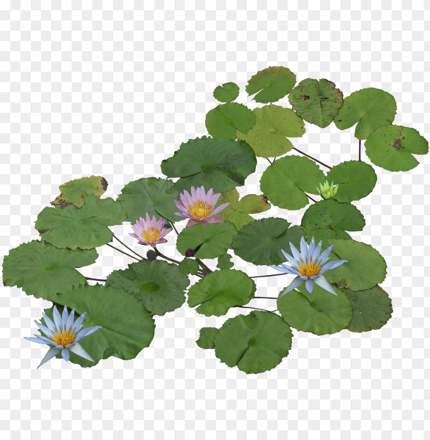 free PNG thư viện cây photoshop plant texture, flower texture, - water plant png pla PNG image with transparent background PNG images transparent