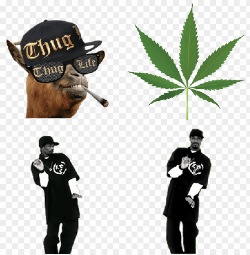 free PNG thug life stuff - thug life meme PNG image with transparent background PNG images transparent
