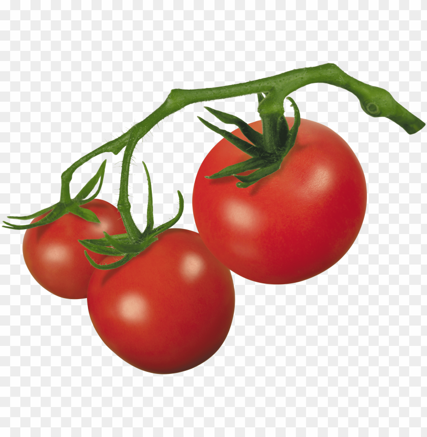 free PNG tomato on vine PNG image with transparent background PNG images transparent