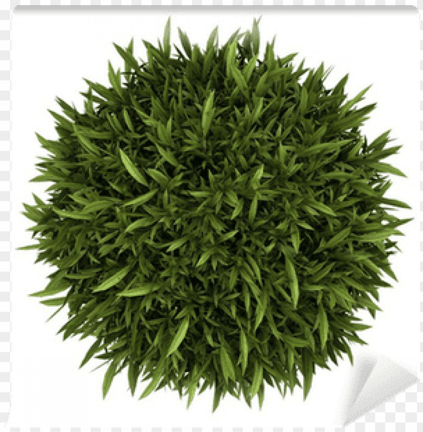 free PNG top view of orange tree in pot isolated on white - plant top view PNG image with transparent background PNG images transparent
