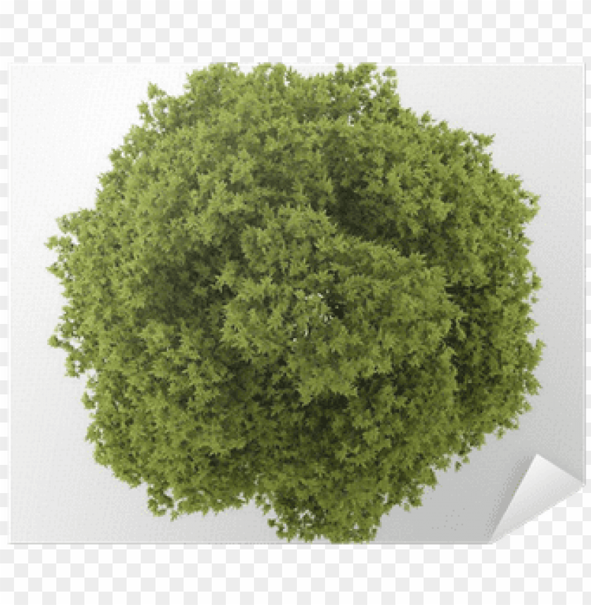 free PNG top view of white ash tree isolated on white background - top view tree PNG image with transparent background PNG images transparent
