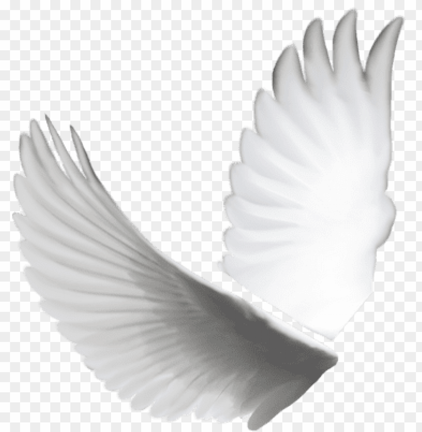 free PNG transparent angel wings tumblr psd detail - dove wings PNG image with transparent background PNG images transparent