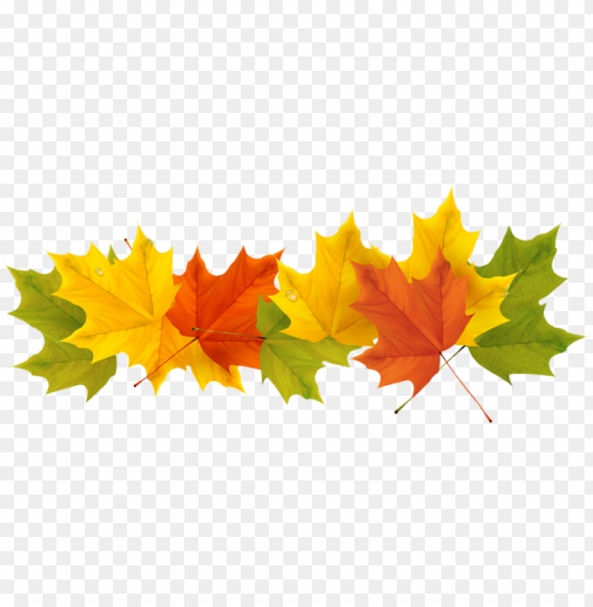 free PNG transparent fall leaves png picture - fall leaves border transparent PNG image with transparent background PNG images transparent