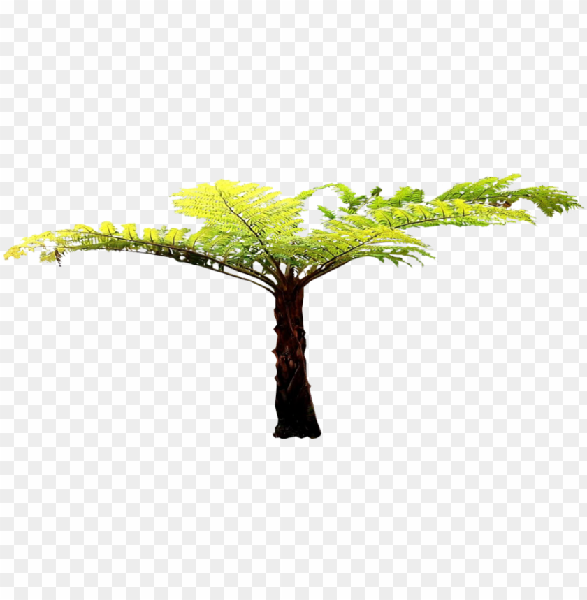 free PNG transparent fern tree - tree fern cut out PNG image with transparent background PNG images transparent