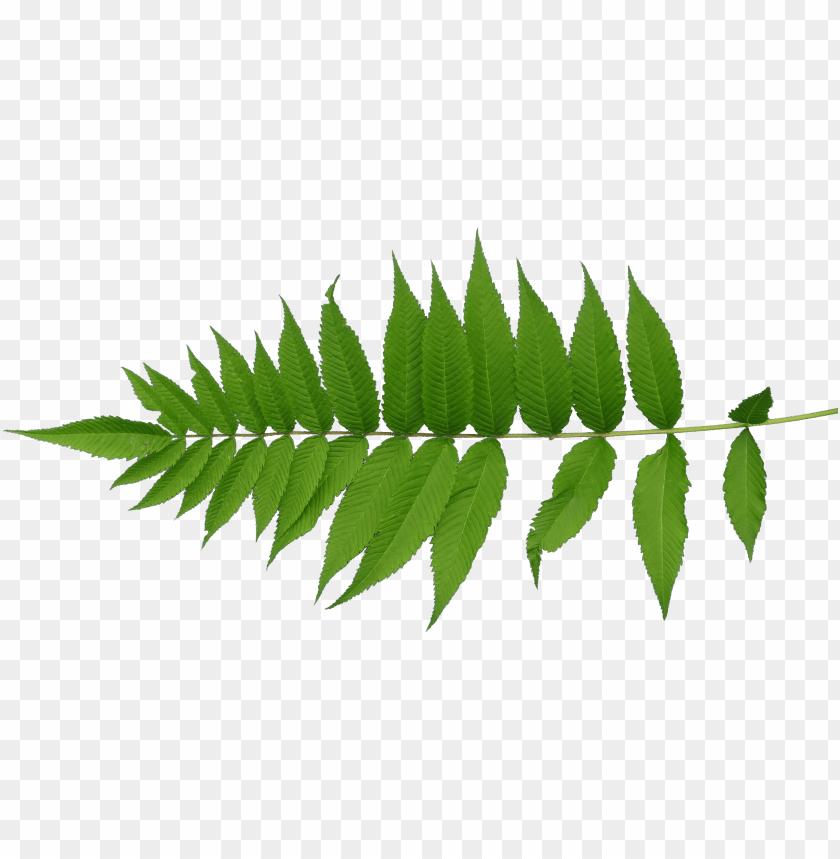free PNG transparent mapping leaf - leaves texture PNG image with transparent background PNG images transparent