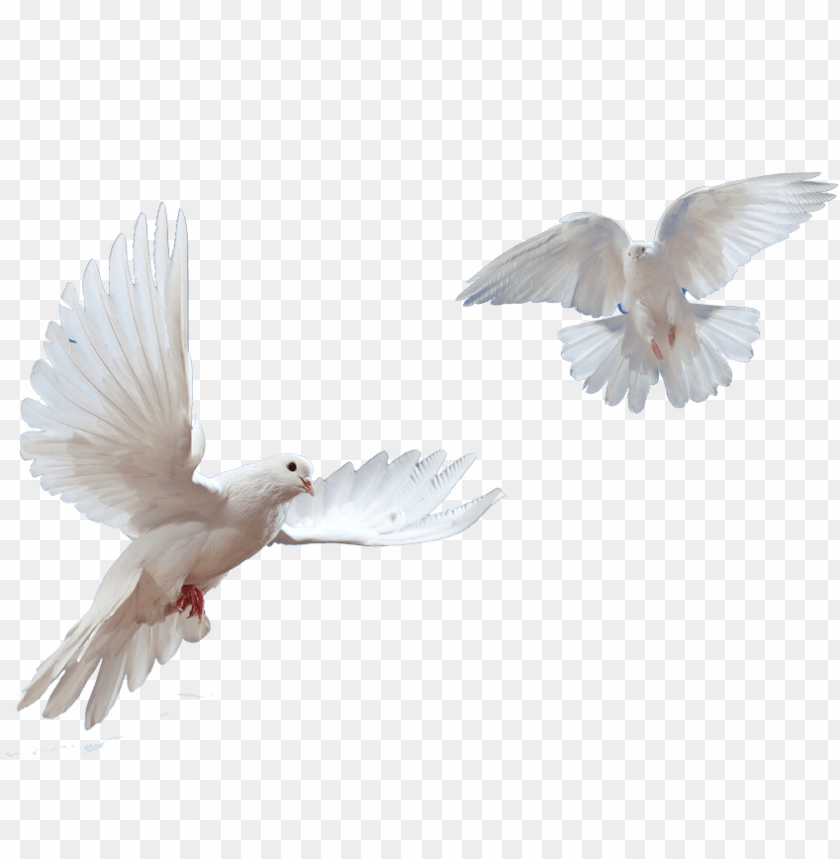 Transparent Pictures Free Icons Picture Black And White Dove Png Image With Transparent Background Toppng