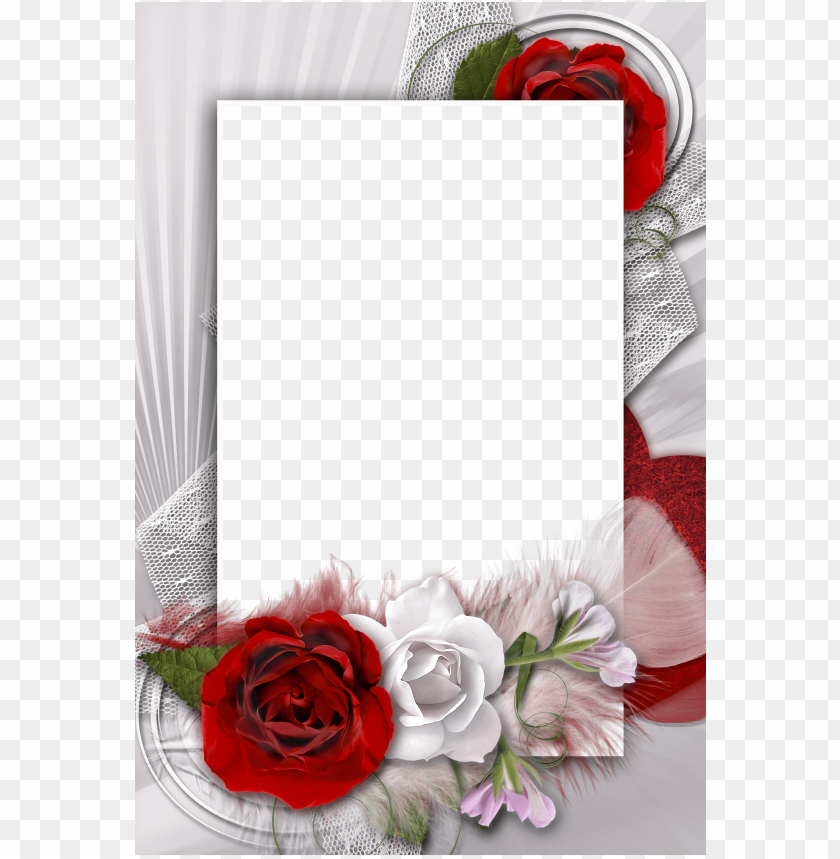free PNG transparent romantic frame with white and red rose background best stock photos PNG images transparent