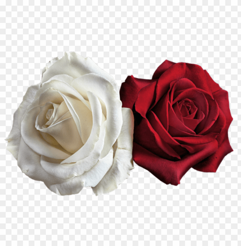 Download Transparent White And Red Roses Png Images Background