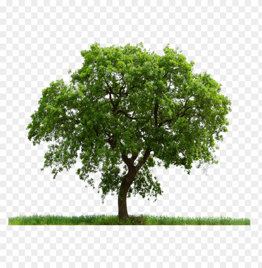 Download tree png images background@toppng.com