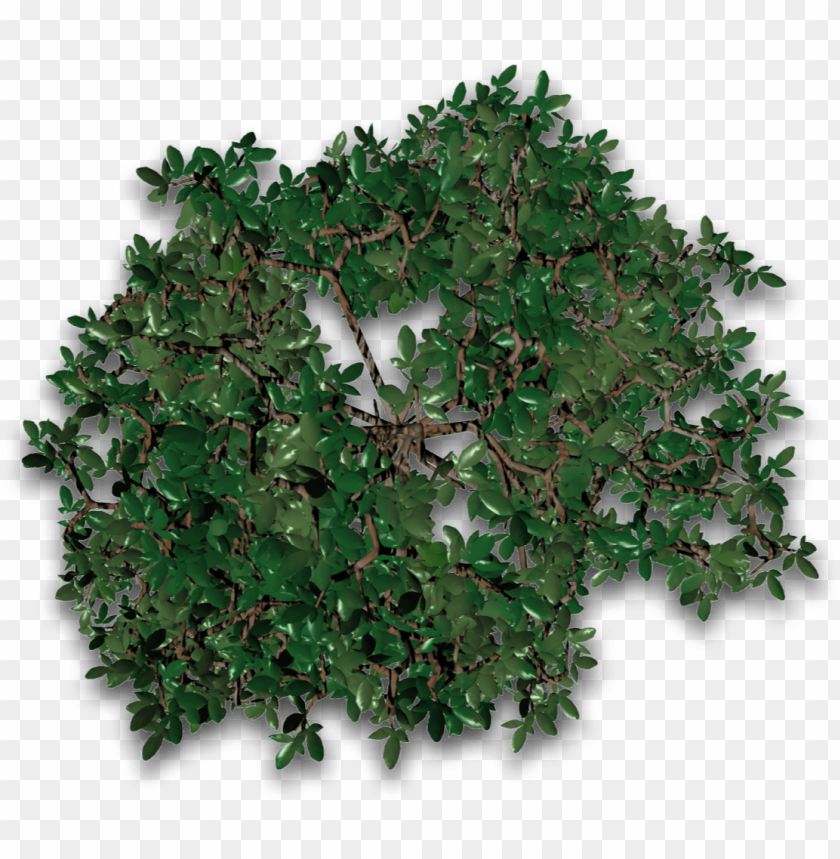 free PNG tree 30 4eyes - maple leaf PNG image with transparent background PNG images transparent