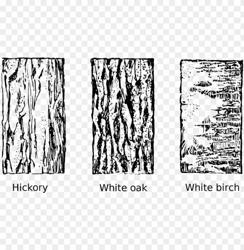 free PNG tree bark tree clipart vector transparent library - drawing tree bark texture PNG image with transparent background PNG images transparent