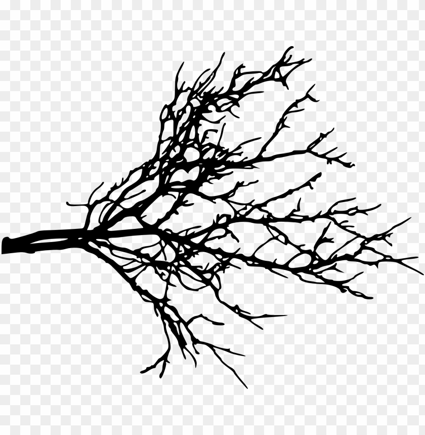 free PNG tree branch png - Free PNG Images PNG images transparent