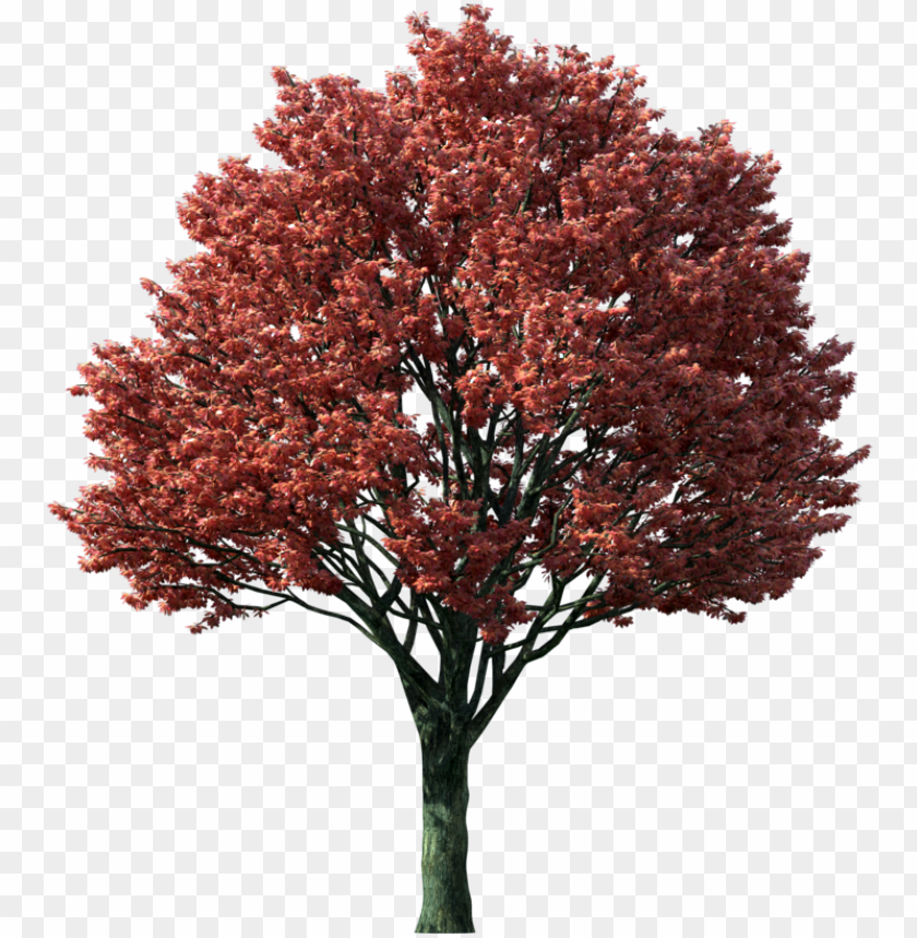 free PNG tree clipart flaming autumn maple tree - japanese maple tree PNG image with transparent background PNG images transparent