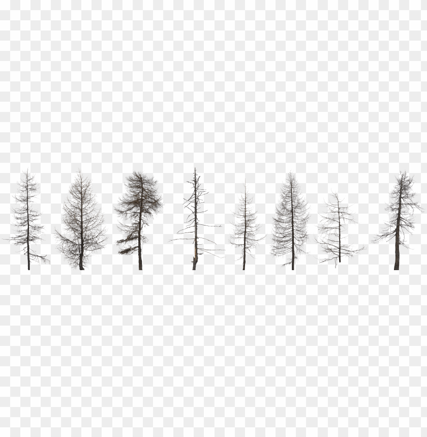 free PNG tree collection dead 2k 0 - dead forest tree PNG image with transparent background PNG images transparent