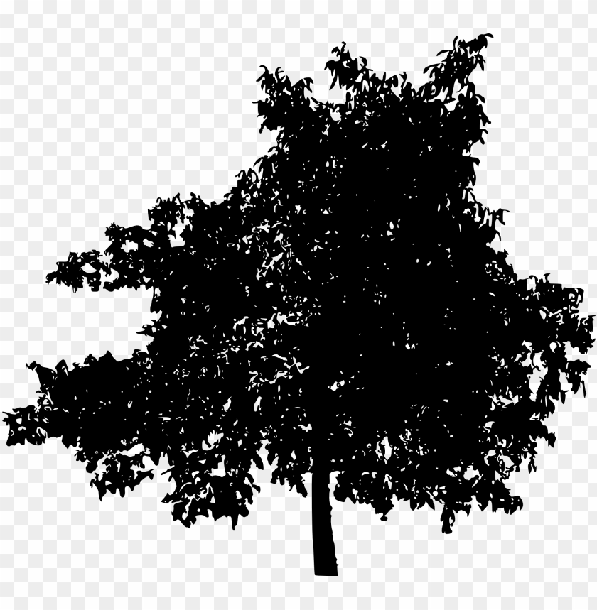 free PNG tree ilhouette png - Free PNG Images PNG images transparent