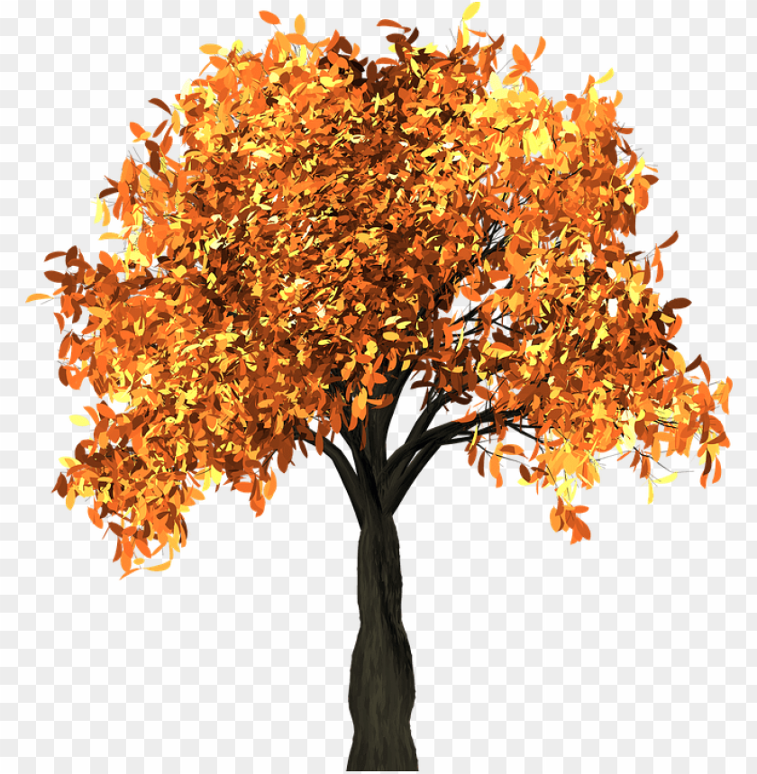 free PNG tree, leaves, autumn, fall, branches, isolated, nature - herbst baum transparent PNG image with transparent background PNG images transparent