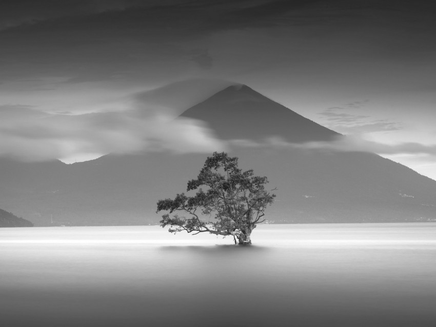 free PNG tree, mountain, bw, minimalism, monochrome background PNG images transparent