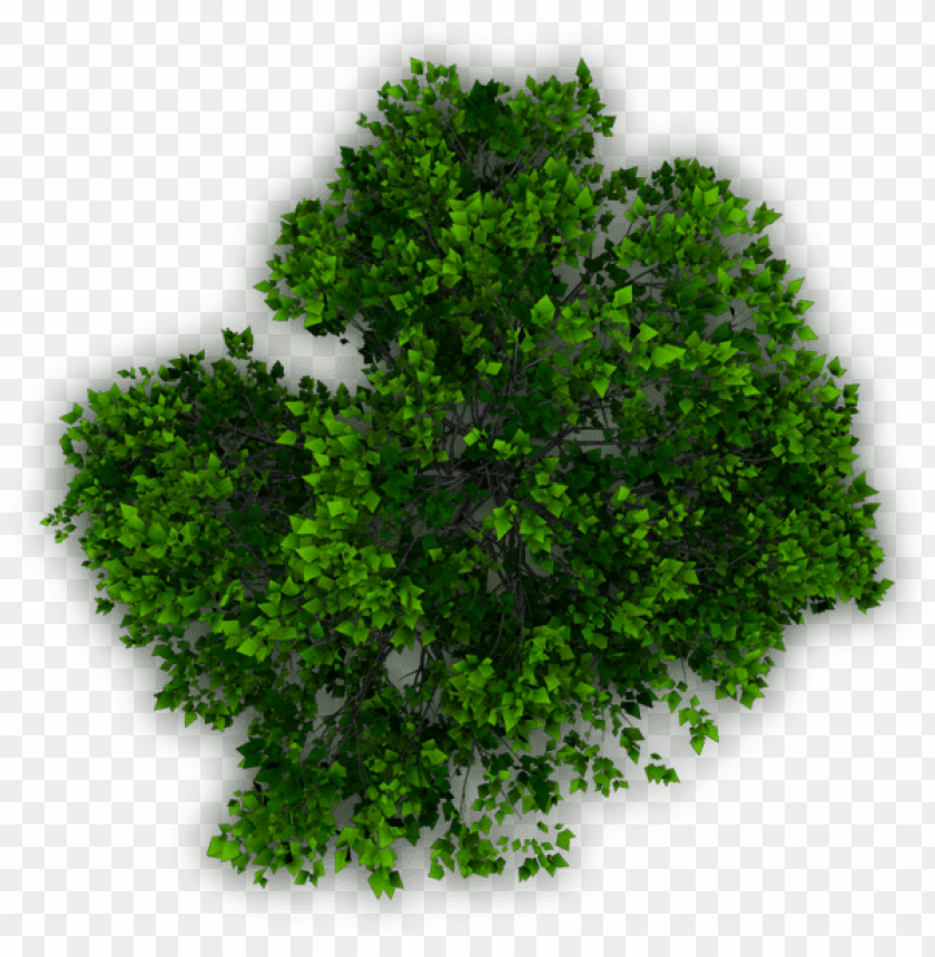 free PNG tree plan png download - trees plan png for photosho PNG image with transparent background PNG images transparent
