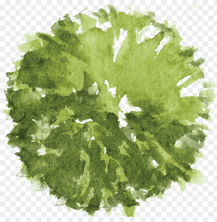 free PNG tree plan png - watercolor tree plan PNG image with transparent background PNG images transparent