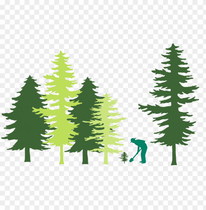 free PNG tree planting in forest illustration - united states capitol PNG image with transparent background PNG images transparent