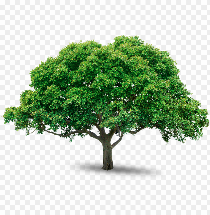 tree png image free download picture tree png - photoshop tree png images free download PNG image with transparent background@toppng.com
