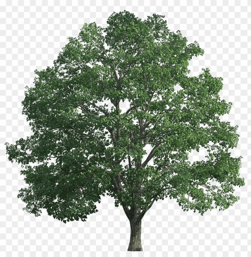 Realistic Tree Plan Photoshop