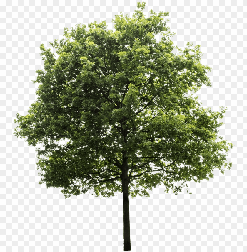 free PNG tree render, oak tree, trees to plant, tree photoshop, - transparent background png tree PNG image with transparent background PNG images transparent