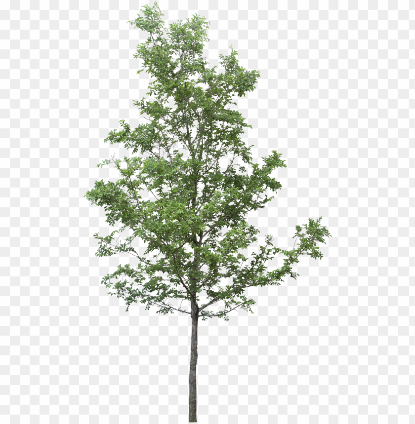 free PNG tree render, tree photoshop, tree sketches, landscape - tree PNG image with transparent background PNG images transparent