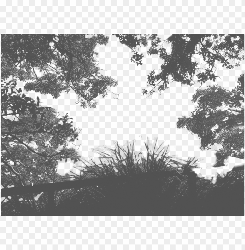 free PNG tree shadow png - shadow of trees PNG image with transparent background PNG images transparent