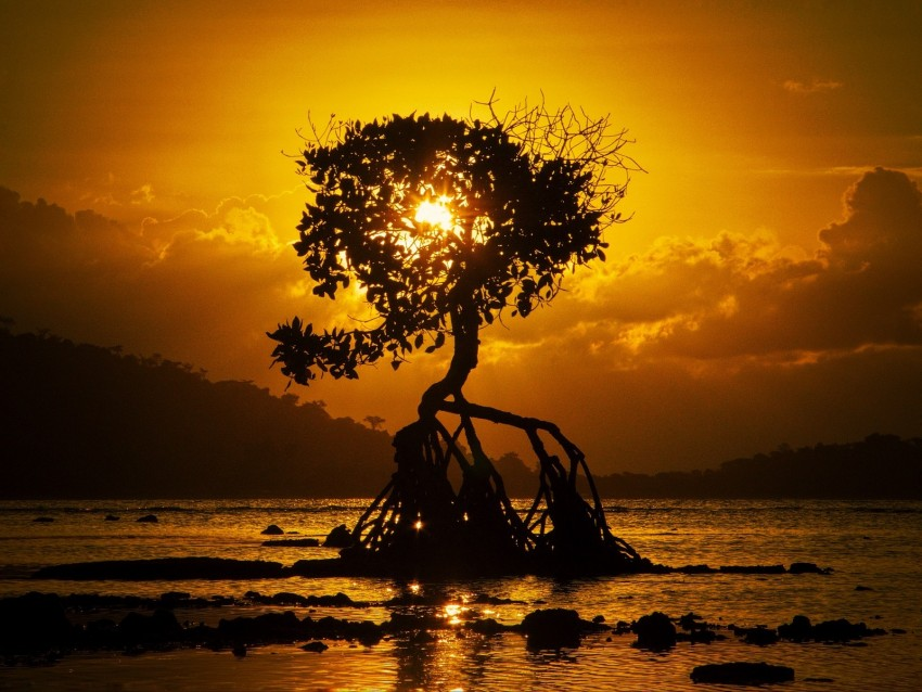 free PNG tree, sunset, roots, shore, bali background PNG images transparent