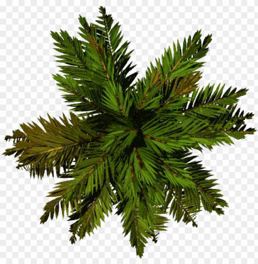 free PNG tree top png file - palm top view PNG image with transparent background PNG images transparent