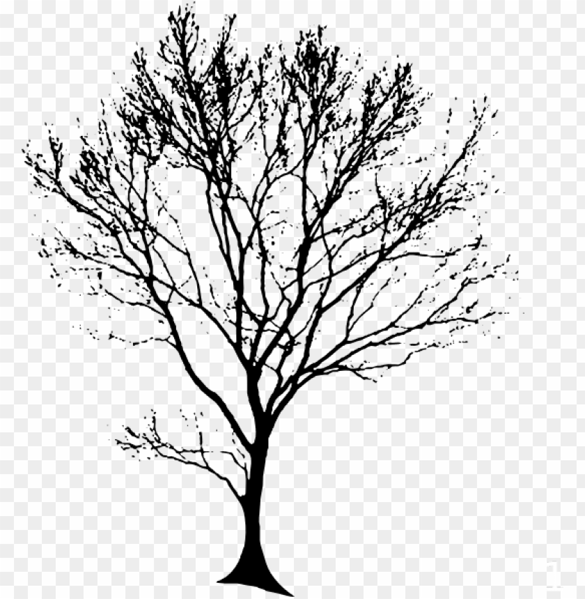 free PNG tree trunk line drawing at getdrawings - tree line drawing PNG image with transparent background PNG images transparent