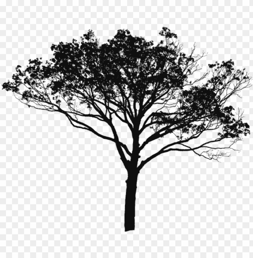 free PNG tree vector black and white, tree vector clipart, tree - sunset image of scenery PNG image with transparent background PNG images transparent