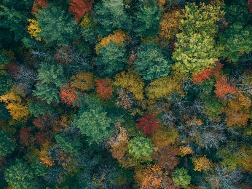 free PNG trees, aerial view, autumn, autumn colors, forest, colorful background PNG images transparent