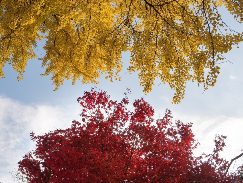 free PNG trees, autumn, fall colors, foliage background PNG images transparent