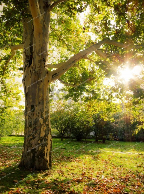 Trees Background Image Background Best Stock Photos Toppng