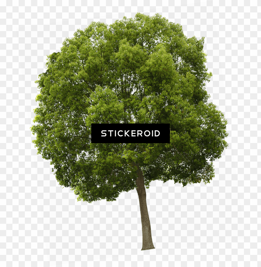 free PNG trees  high resolution PNG image with transparent background PNG images transparent