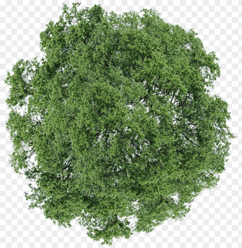 free PNG trees plan for photoshop graphic download - architectural tree png pla PNG image with transparent background PNG images transparent