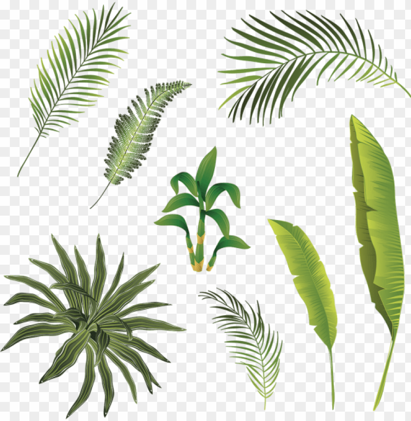 free PNG tropical branch and leaves collection, tropical branch - hojas tropicales vector PNG image with transparent background PNG images transparent
