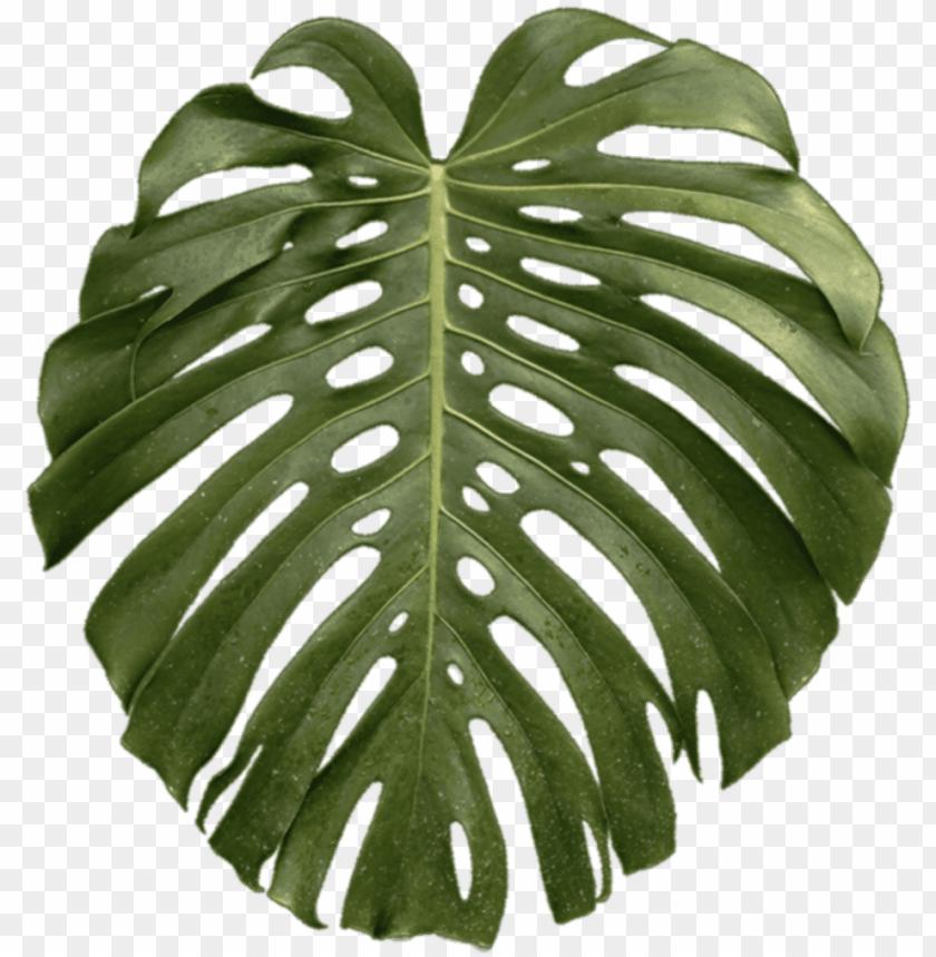 free PNG tropical plant leaf png - transparent tropical plant PNG image with transparent background PNG images transparent