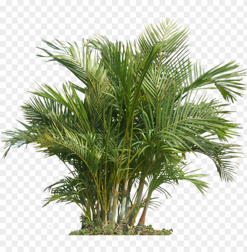 free PNG tropical plants png - tropical plant PNG image with transparent background PNG images transparent