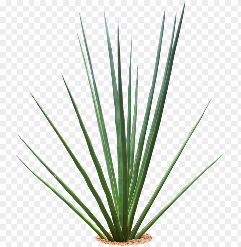 free PNG tropical plants png - tropical plants with transparent background PNG image with transparent background PNG images transparent