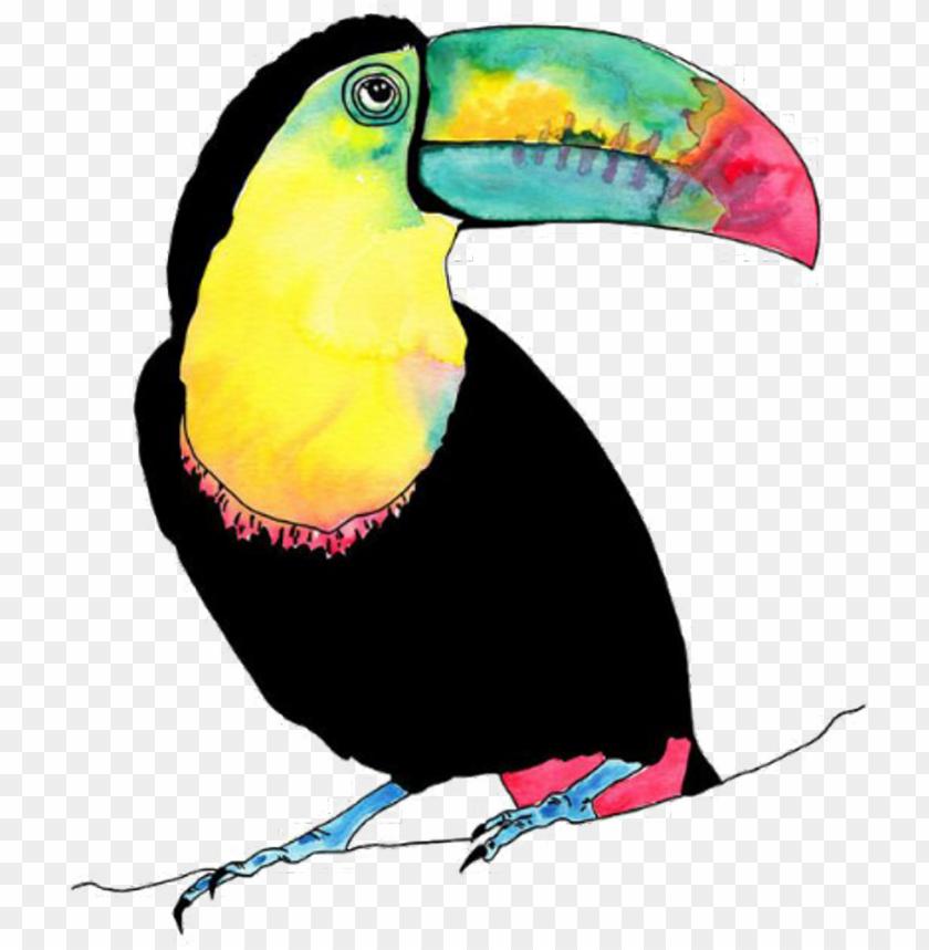 free PNG tucan bird vogel animal birds animals petsandanimals - watercolour tropical birds PNG image with transparent background PNG images transparent