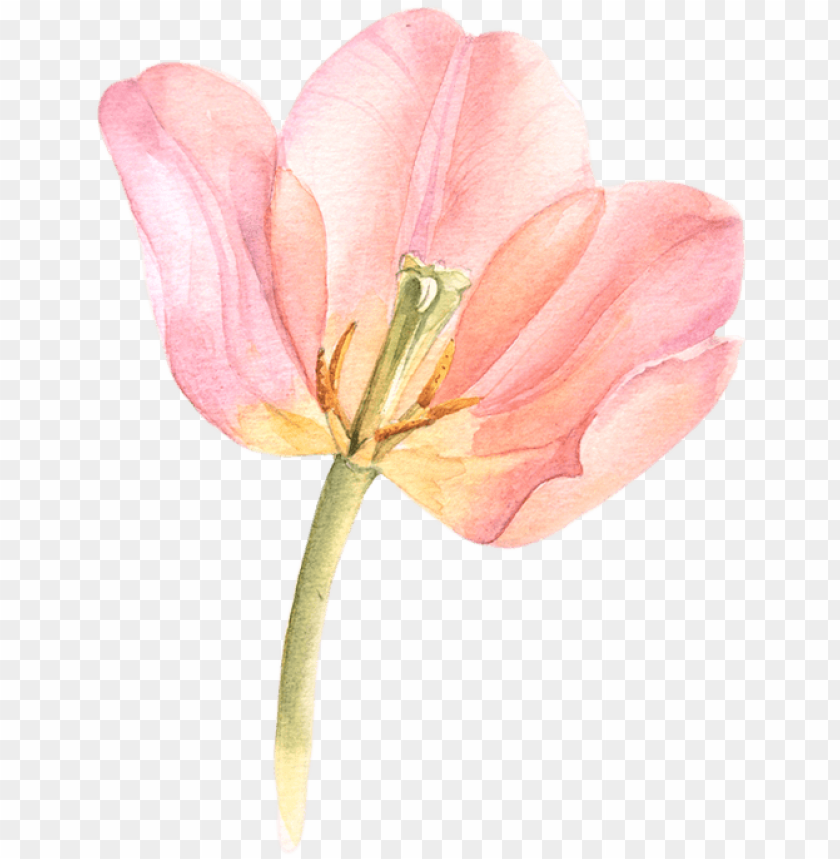 free PNG tulip transparent watercolor black and white library - watercolor flowers tulips PNG image with transparent background PNG images transparent